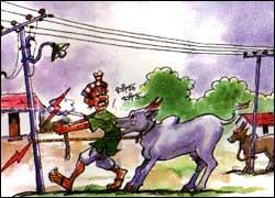 Do not tie cows to electric poles. ವಿದ್ಯುತ್ ಕಂಬಗಳಿಗೆ ದನಕರುಗಳನ್ನು ಕಟ್ಟಿ ಹಾಕಬೇಡಿ.